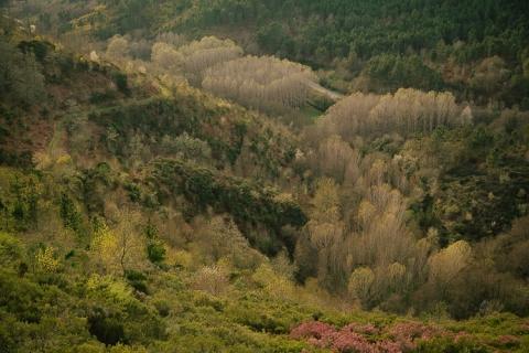 preboda, verín, verin, galicia, fotografo, ourense